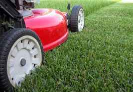 Maryland Lawn Cutting Service